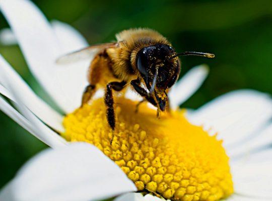 Pourquoi parrainer une ruche d'abeilles ?